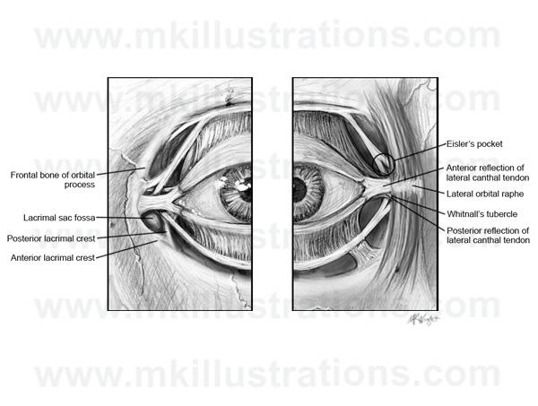 deep_eye_anatomy